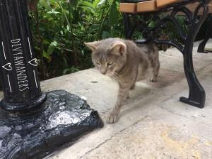 hemmingway house cats